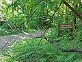 Route du Poteau de Paradis (forêt de Montmorency) - panoramio.jpg