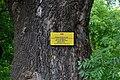 Rozhyshche Volynska-Fraxinus ordinary nature monument-information board.jpg