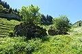 Ruin of chalet @ Hike to Pointe de Talamarche & Lanfonnet (41293648450).jpg