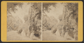Rustic steps, near the Play Ground, Central Park, from Robert N. Dennis collection of stereoscopic views.png