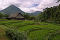 Sa Pa Rice Terrace II.jpg