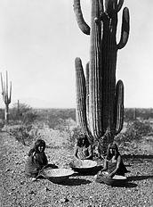 Saguaro gatherers2