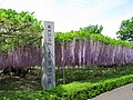 Saitama Aobaen Wisteria 1.JPG