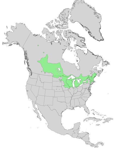 File:Salix petiolaris range map 0.png