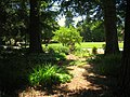 San Mateo Arboretum, San Mateo, CA - IMG 9089.JPG