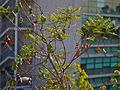 Santiago de Chile-CTJ-IMG 5356.jpg