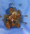 Santorum with clear lube.jpg