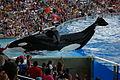 Shamu Stadium SeaWorld Orlando Florida.jpg