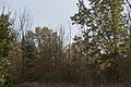 Sharon Woods-Forests in Fall 1.jpg