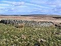 Sheep Fank - geograph.org.uk - 350891.jpg