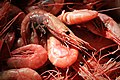Shrimps (4408094771).jpg