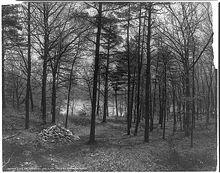 Photographie de Thoreau's Cove, lieu où l'auteur de Walden édifia sa maisonnette.