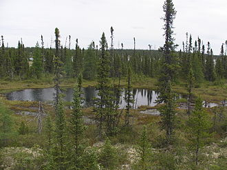 Picea mariana - Image: Small lake in the depths of the taïga