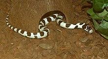 Snake-Serpentes.jpg