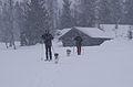 Snow (4497832294).jpg