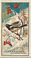 Snow Bird, from the Birds of America series (N4) for Allen & Ginter Cigarettes Brands MET DP828721.jpg