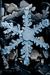 Snow crystals 2b.png