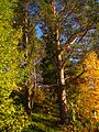 Sorsele NV, Sweden - panoramio (28).jpg