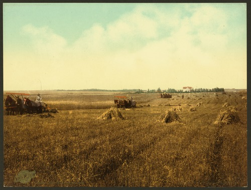 A harvest in South Dakota in 1898 South Dakota harvest field-LCCN2008678244.tif