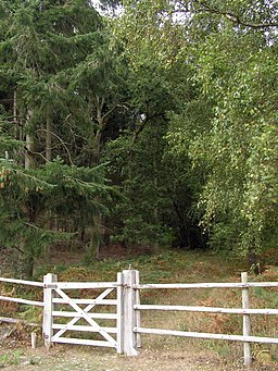 Southern entrance to Hasley Inclosure, New Forest - geograph.org.uk - 236206