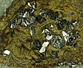 Sperrylite in platinum-copper ore (Permian-Triassic boundary time, 251 Ma; Norilsk Mining District, Krasnoyarsk, northern Siberia, Russia) 3 (19275789352).jpg
