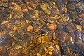 Spey water flowing over amber stones - a natural beauty. - geograph.org.uk - 412687.jpg