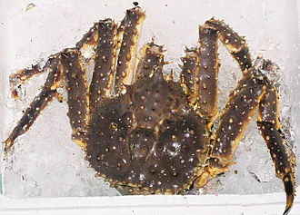 Red king crab - Image: Spider crab