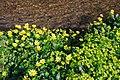 Spring Flora by Ashford Water, Alderholt Mill - geograph.org.uk - 385560.jpg