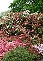 Spring at Bodnant - geograph.org.uk - 804535.jpg