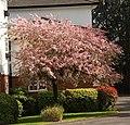 Spring in Epsom (7126100771).jpg