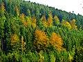 Spruce And Beech - panoramio.jpg
