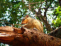 Squirrel on top of tree.jpg