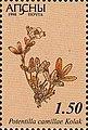 Stamp of Abkhazia - 1999 - Colnect 1003121 - Potentilla comillae Kolak.jpeg