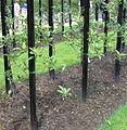 Standard fruittreeform.JPG