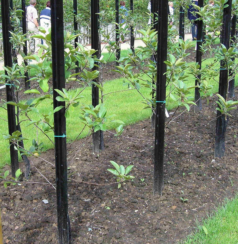 Standard fruittreeform