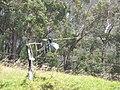 Starr-120627-7655-Eucalyptus sp-habitat and helicopter landing in pasture-Hawea Pl Olinda-Maui (24817937779).jpg