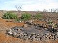 Starr-121220-9339-Ipomoea batatas-cultivation-Lua Makika-Kahoolawe (24903832110).jpg