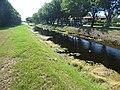 Starr-160718-0252-Pistia stratiotes-canal in back-Vitas Healthcare Delray Beach-Florida (29632675896).jpg