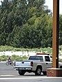 Starr 080604-6140 Casuarina equisetifolia.jpg