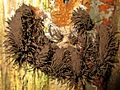 Stemonitis (Eumycetozoa sp.), Hoge Veluwe, the Netherlands.jpg