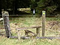 Stile into pine forest - geograph.org.uk - 750307.jpg