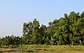 Sundarbans at noon 1.jpg