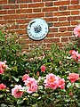 Sundial and Roses - geograph.org.uk - 541214.jpg