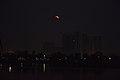 Super Blue Blood Moon Over Rajarhat - Salt Lake City - Kolkata 2018-01-31 1013.JPG