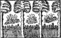 Svedjeland i skogarna.png