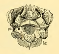 The Osteology of the Reptiles-091 edwerew frtrf.png