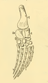 The Osteology of the Reptiles-212 ghyv ghyjjh r5t6 sedrty.png