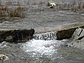 The Outfall of Llyn Idwal - geograph.org.uk - 238787.jpg