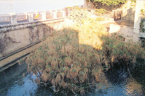 The Papyrus Pool fonte aretusa.jpg