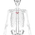 Thoracic vertebra 5 anterior.png